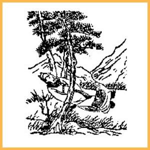 《推背圖》第十一象【興教門變從謙發】